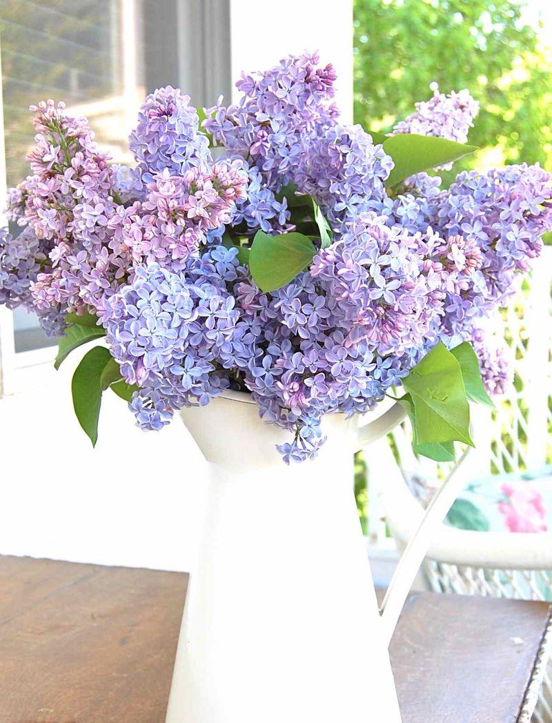 Lilacs06