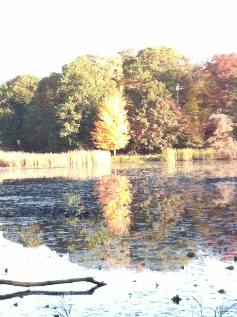 Fall20114