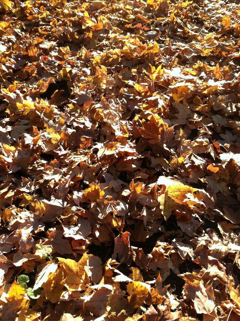 Fall20115