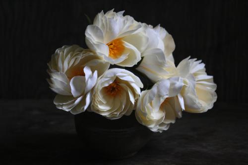 Paper Peony - November Flower 2
